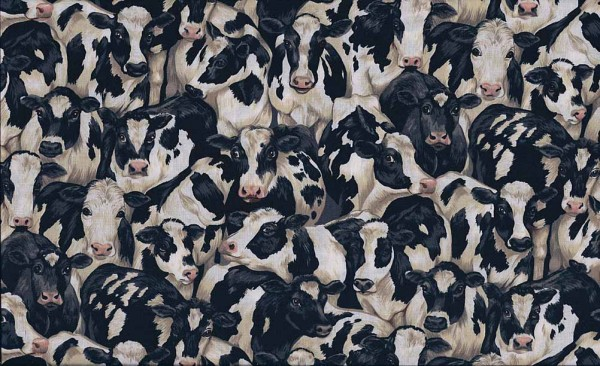 425/X1 Crowded Cows